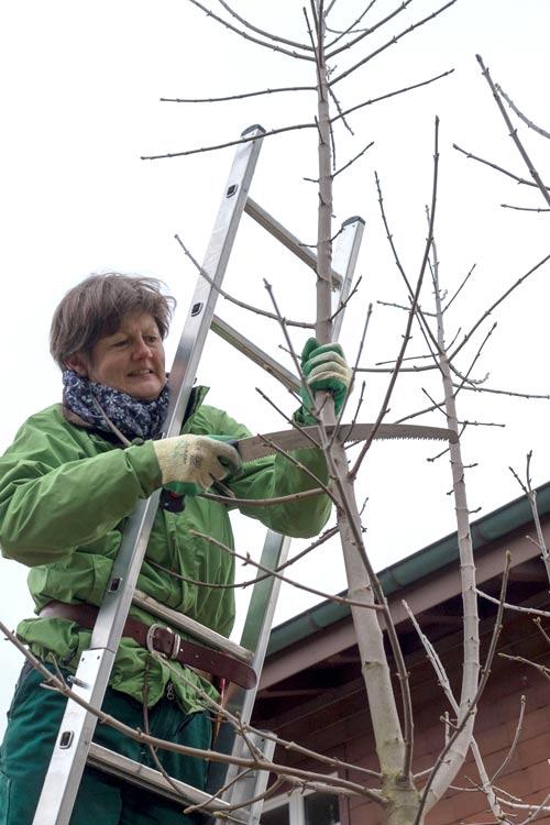 So schneidet man einen Baum - Renate Lorenz